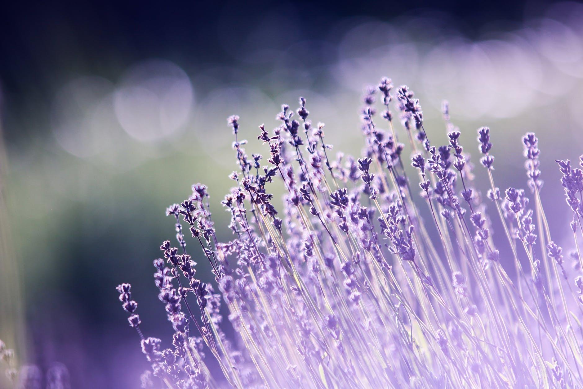 aromatherapy beautiful blooming blur
